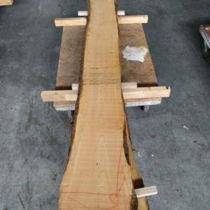 Wildkirsche Bohle 2.510 mm x 230 mm