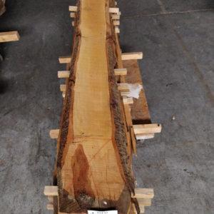 Wildkirsche Bohle 2.520 mm x 170 mm