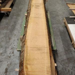 Wildkirsche Bohle 2.620 mm x 280 mm